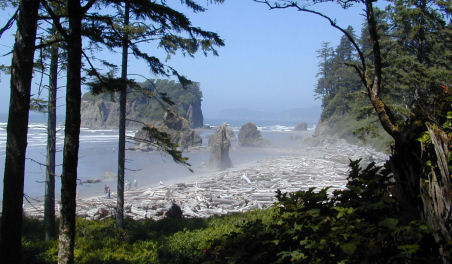 Guide to olympic national park | seattle met.