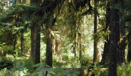 Olympic National Park Go Northwest A Travel Guide