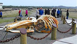 Long Beach Washington Attractions Go Northwest A Travel