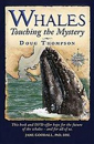 Whales-Touching-the-Mystery