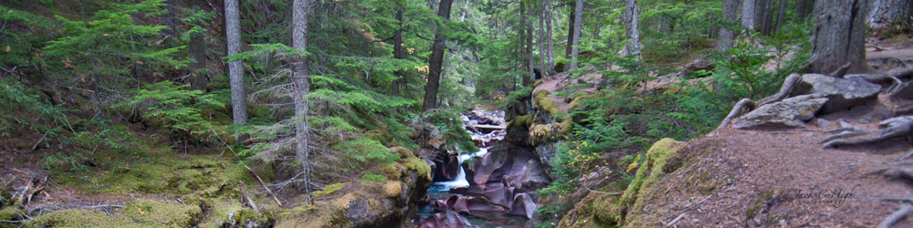 Small creek hidden inside forested land at Glacier National Park