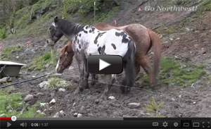 E Z Times Horseback Riding Video