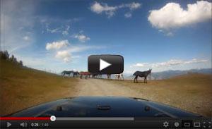 Heaven's Gate Horses Video